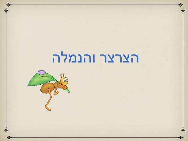 הצרצר והנמלה by מעין אילוז