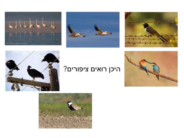 היכן רואים ציפורים by Gomer Shlomo