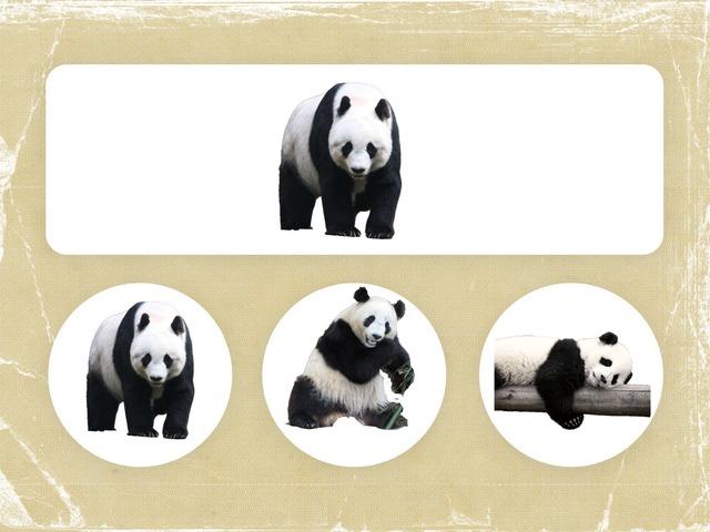 Panda Wil Een Vriendje. Dezelfde En Anders. by jole gielen