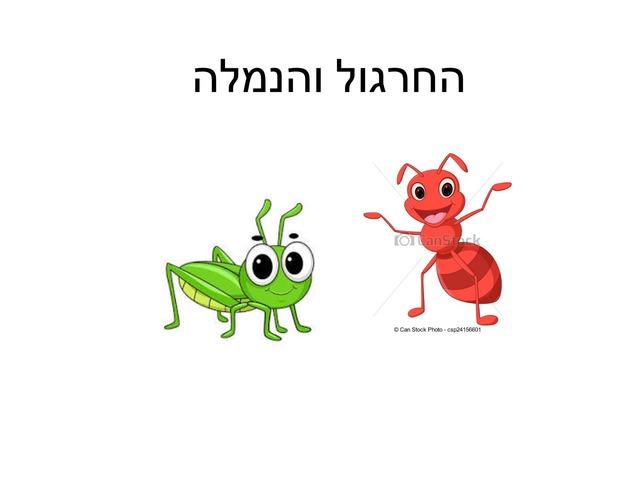 החרגול והנמלה מכלוף מרגלית by מכללה תלפיות