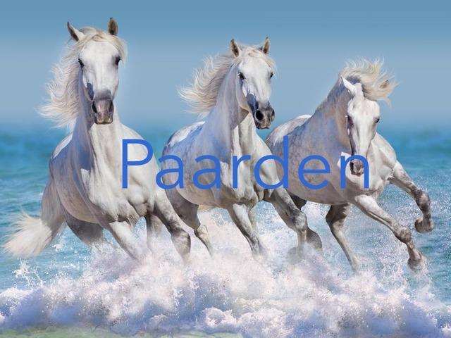 Paarden by Nancy