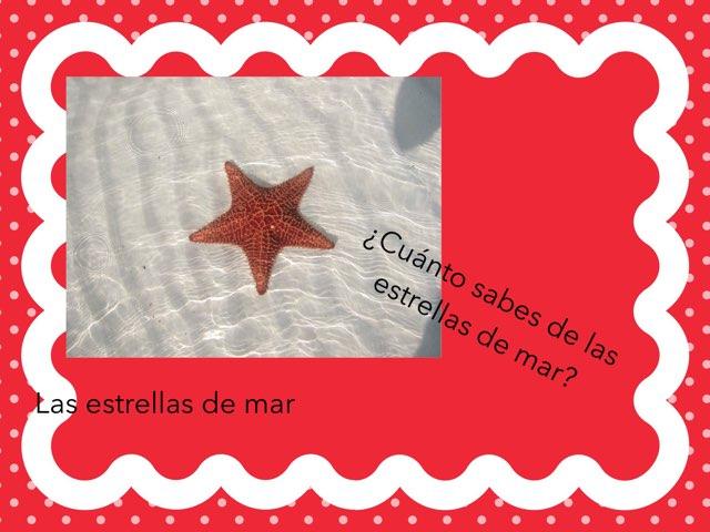 Estrellas De Mar  by Maria Jose Cuenca