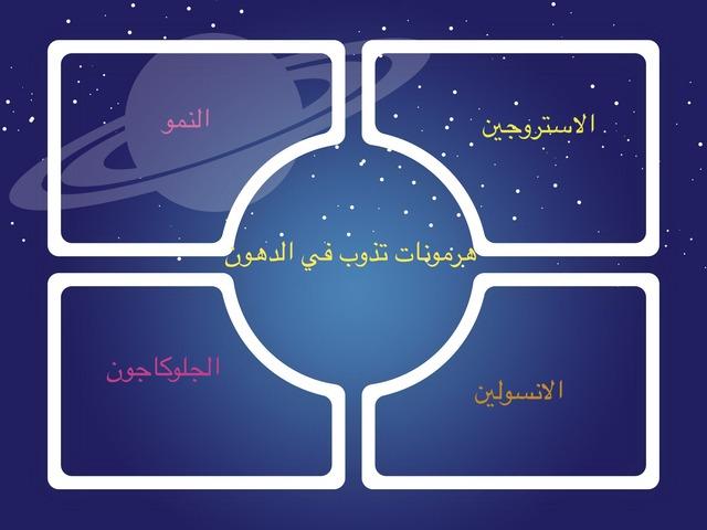 جهاز الهضم والغدد الصم  by Zooz Ali