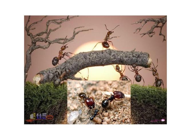 النملة الذكية by عيدة العازمي