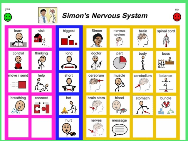 January Unique Unit Supplemental Reading Sight Word Find: Nervous System  by Tanya Folmsbee