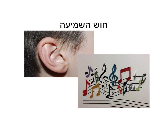 צליל וסימן by מיתל ירושלים