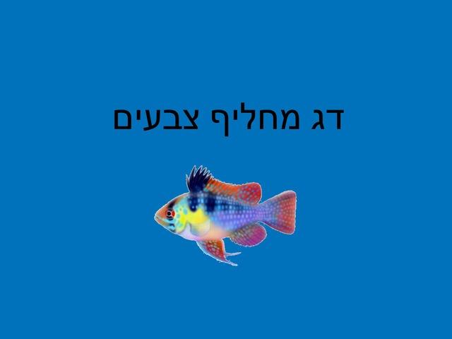 דג מחליף צבעים by מכללה תלפיות