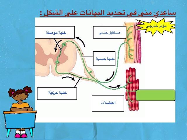 أنواع الخلايا العصبية by aisha90 91