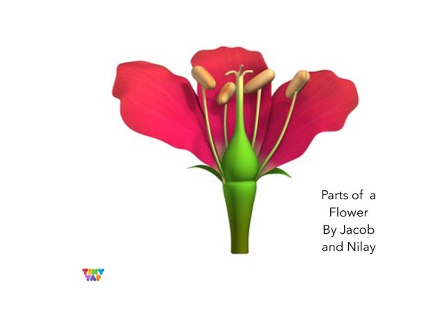 Jacob & Nilay's Flower Parts by Ashley Shaw