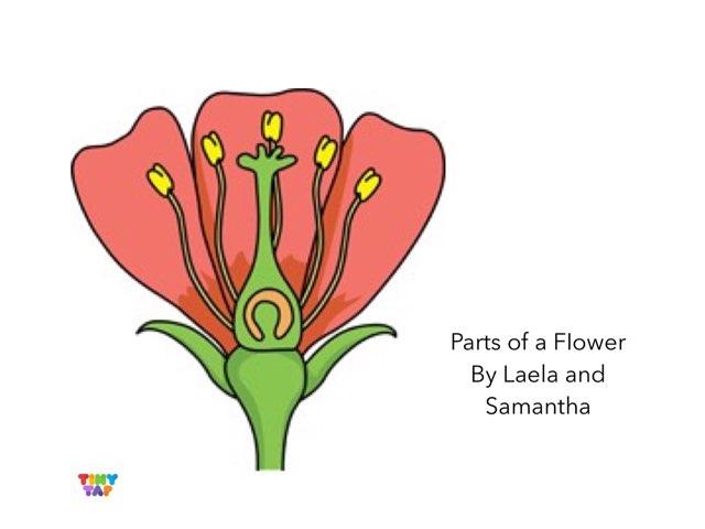 Laela & Samantha's Flower Parts by Ashley Shaw