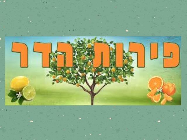 פירות הדר זיהוי by Yifat Simcha