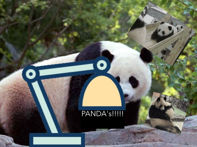 Pandas by Jane Miller _ Staff - FuquayVarinaE