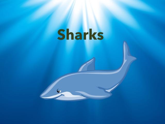 Sharks by Zalina Ismail