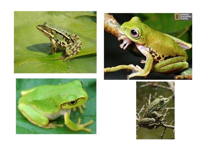הכר את הצפרדע  by רינת ידגר