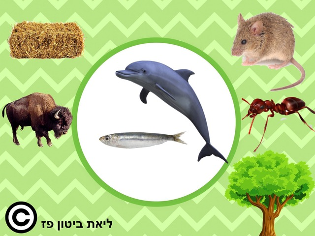מזונם של בעלי החיים 3 עברית by Liat Bitton-paz