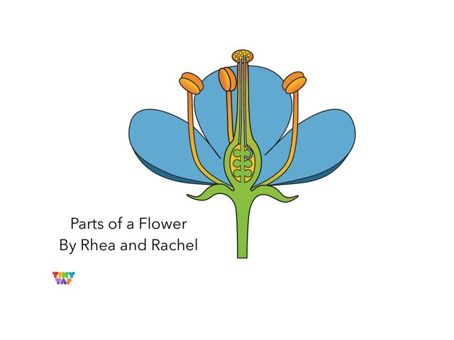 Rhea & Rachel's Flower Parts by Ashley Shaw