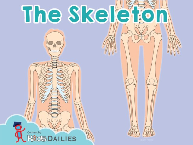 The Skeleton by Kids Dailies