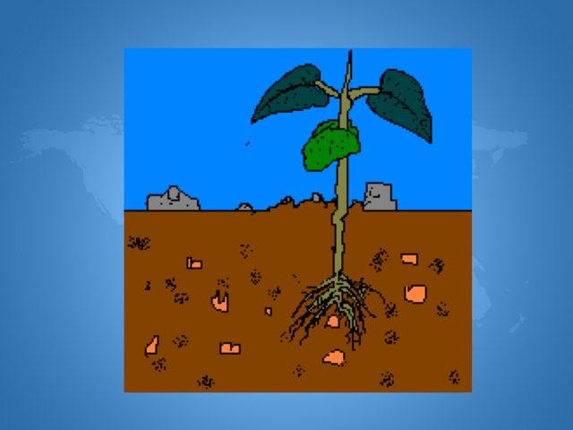النبات by Reta Saad