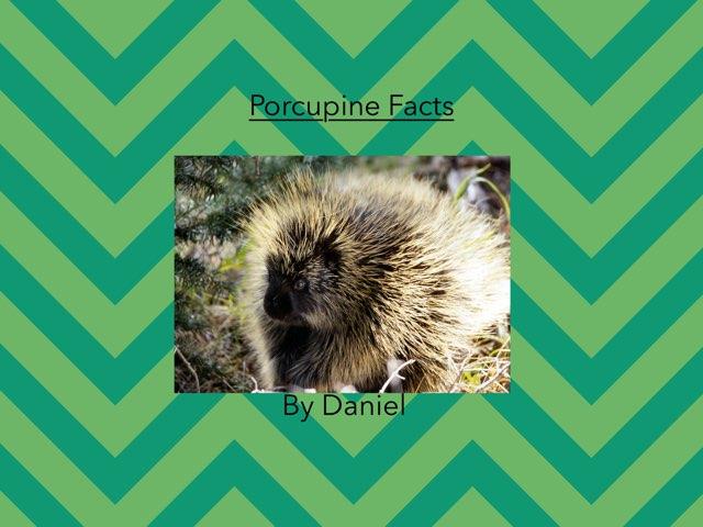 Porcupine By Daniel by Hulstrom 1st Grade