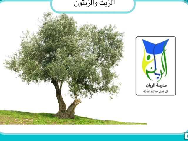 الزيتون by עאטף נסאסרה
