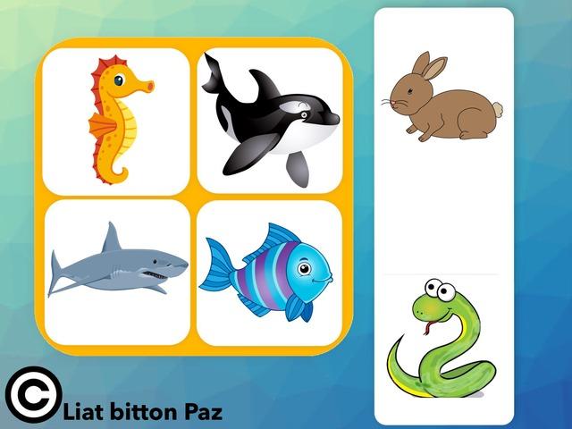 מיון והכללה בעלי חיים בים  4 by Liat Bitton-paz