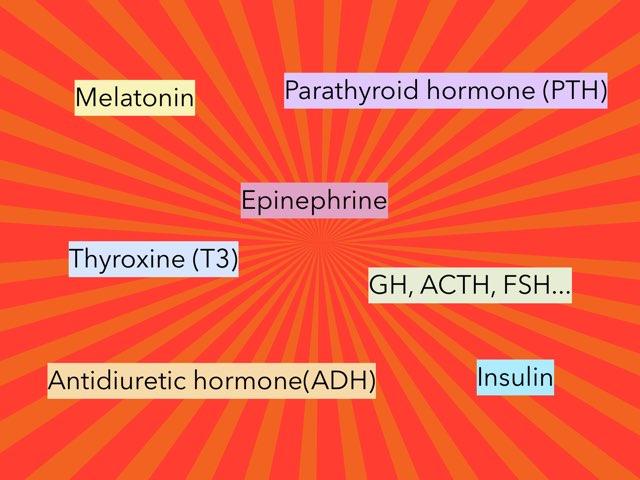 Endocrine Glands by Sarah Schlussel