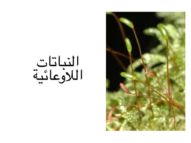 النباتات اللاوعائية by احمد كريري