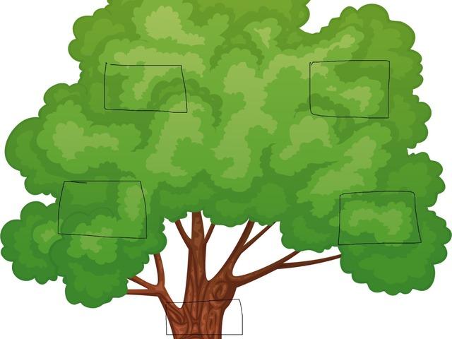 עץ שורשים by danielle kangisser