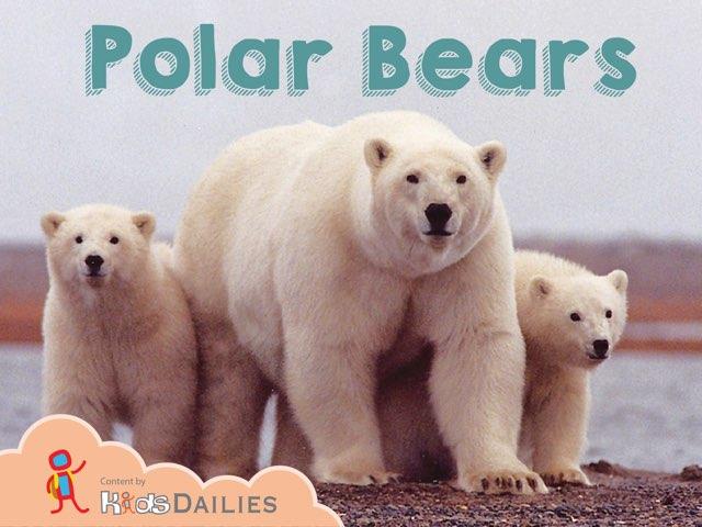 Polar Bears by Kids Dailies