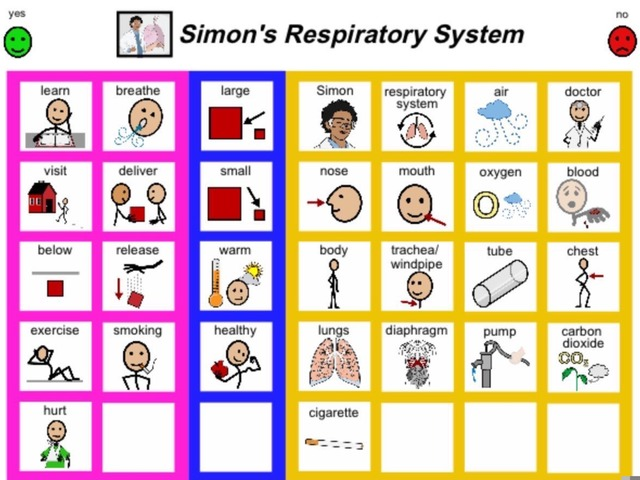 January Unique Unit Supplemental Reading Sight Word Find:Respiratory System  by Tanya Folmsbee