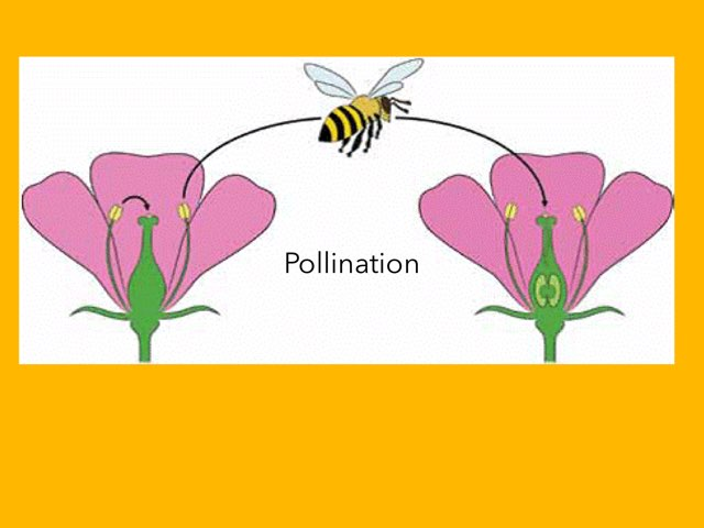Pollination by Jeannine quirk