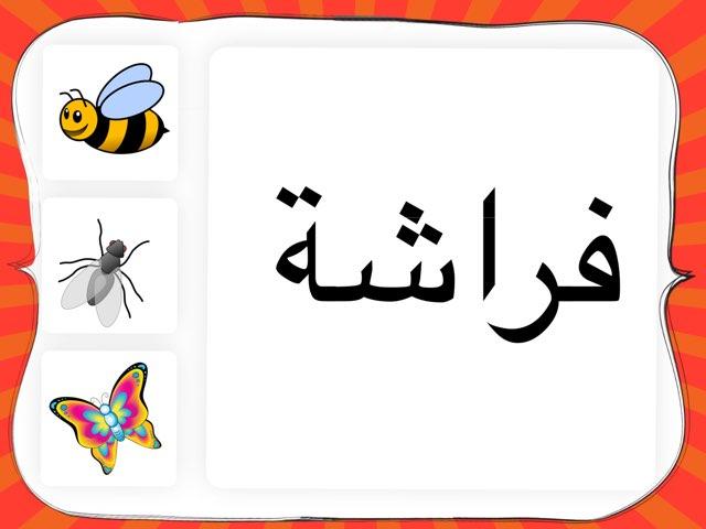 كلمة فراشة by Anayed Alsaeed