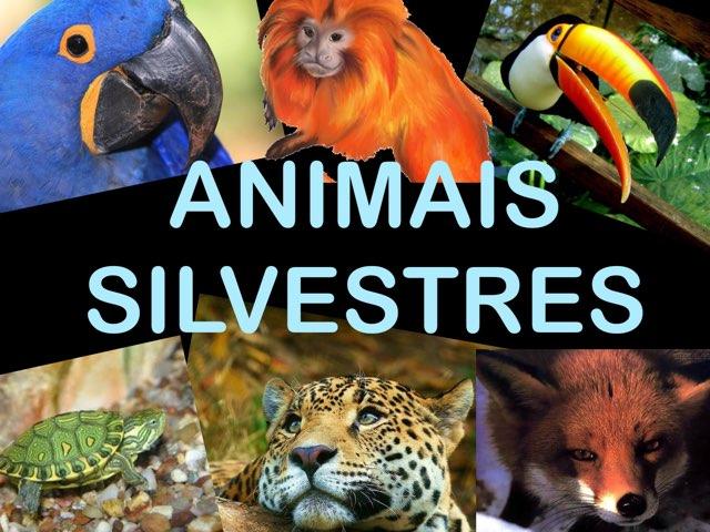 Conhecendo os animais  by Pueri digital verbo divino