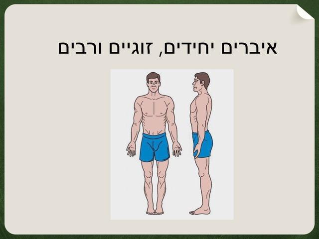 איברים יחידים וזוגיים by מיתל ירושלים
