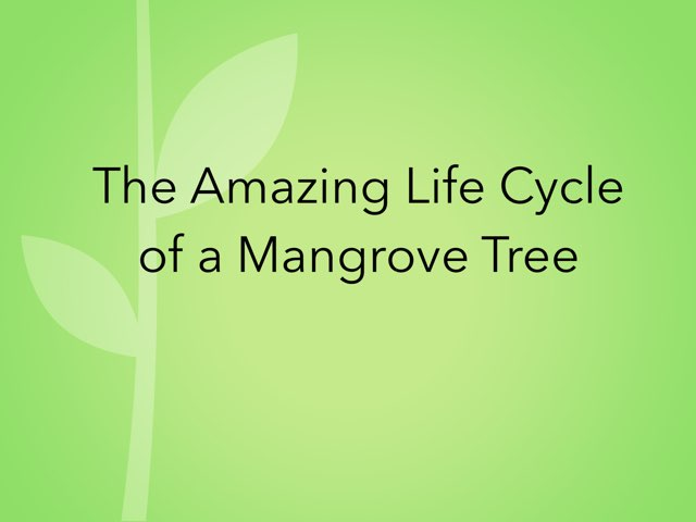 Mangrove Cycle By Dunn's Class by Diana Coyne