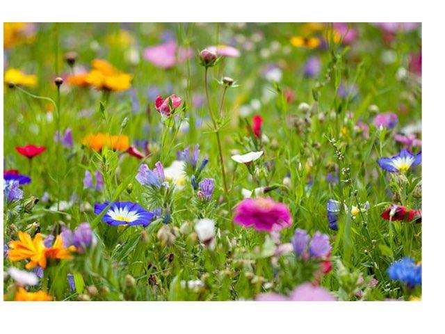 משחק האביב by ענבל שמעונוב