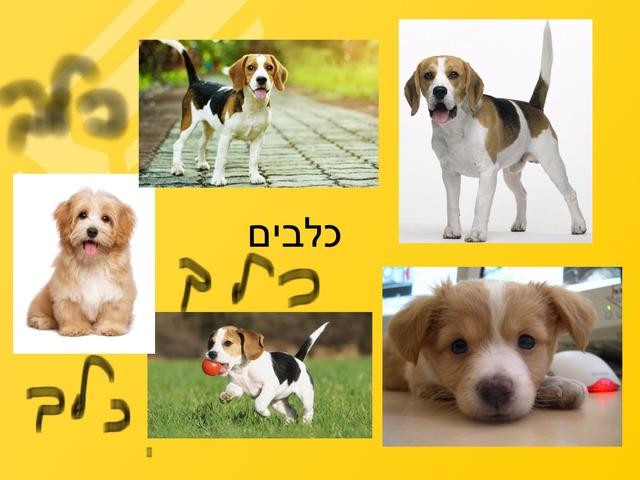 כלב by kiach school
