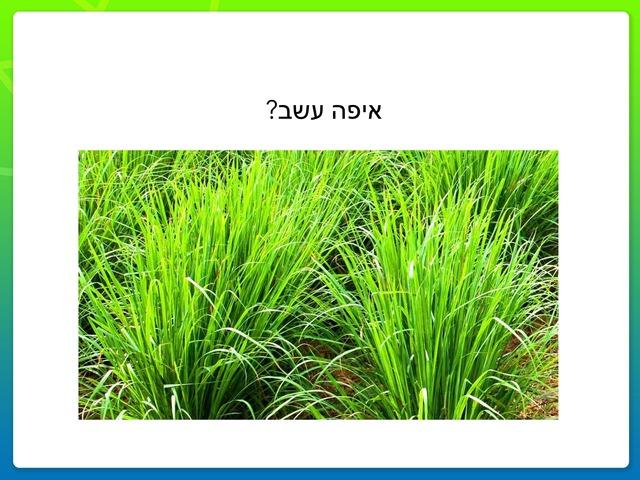 עשב ואדמה by Inbar Adar