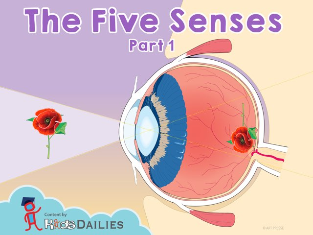 The Five Senses 1 by Kids Dailies