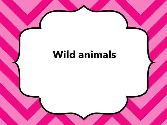 Wild World  by Lama Ali