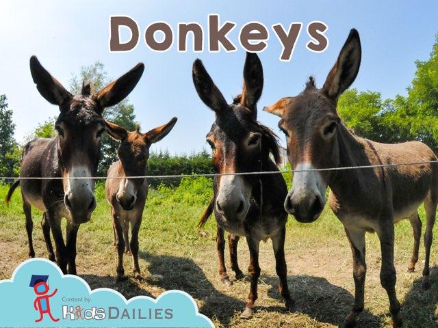 Donkeys by Kids Dailies