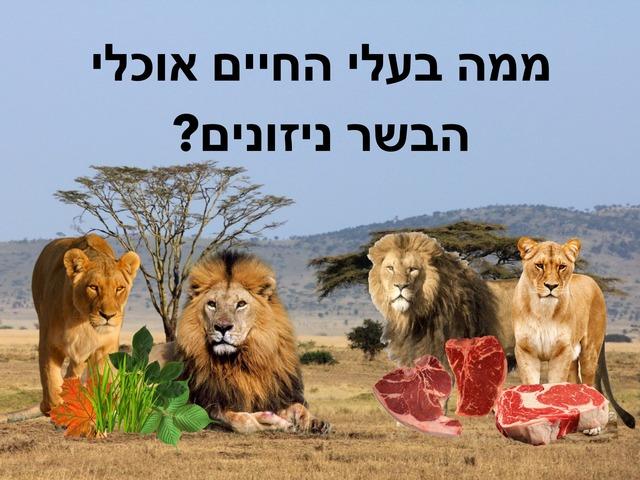 בעלי חיים אוכלי בשר by Hadar Itzhaki
