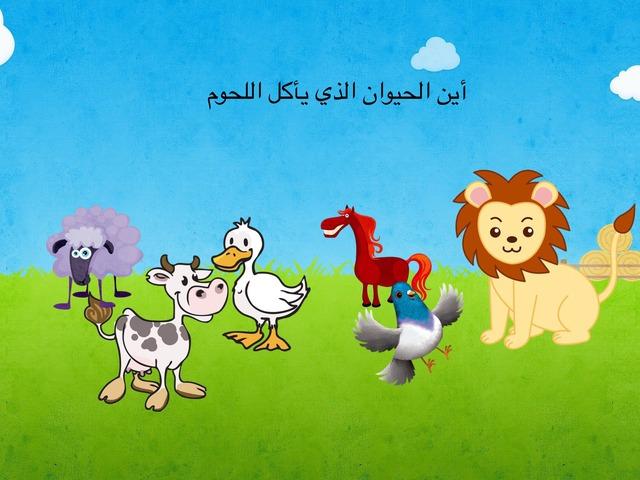 أين الحيوان by بدور النجراني