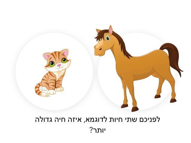 אני בוחר חיה גדולה  by Aladdin Schedem