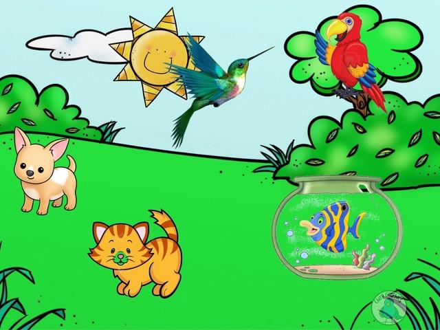 Mascotas Claret by Carlos Flores González