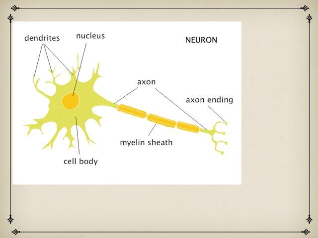 Nervous System by Sarah Schlussel