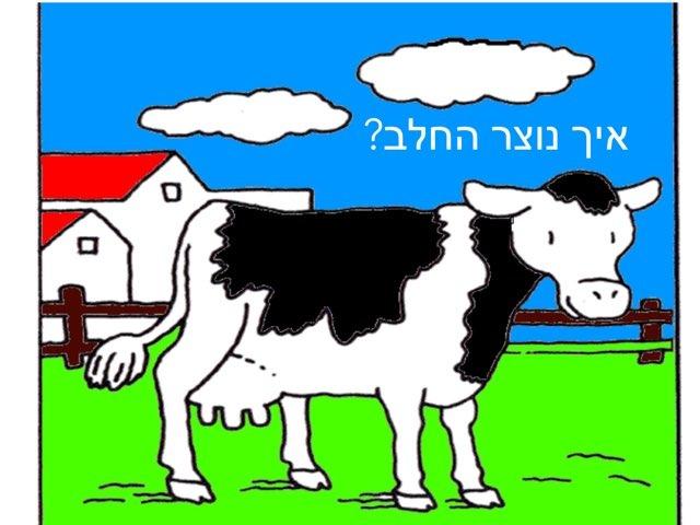 איך נוצר החלב by לירון סעדון