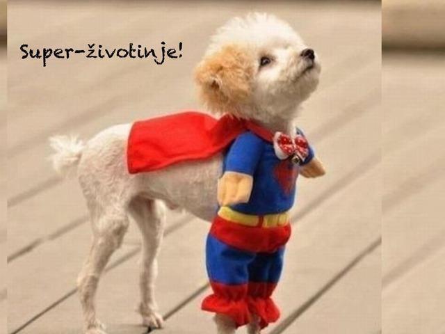 Super Životinje by natasa delac