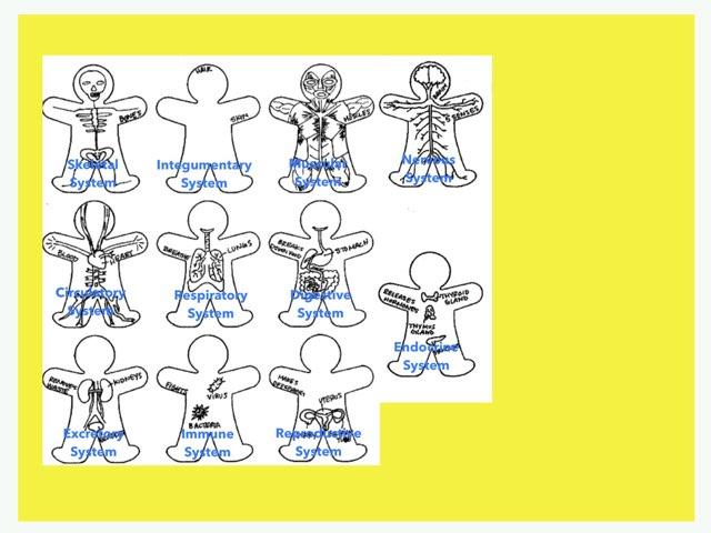 DPISD Body Systems by Marla Chandler
