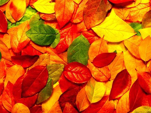E1-TT-u2-Colours by Teeny Tiny TEFL